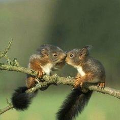 Kissing squirls