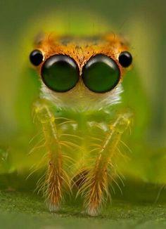 Weirdly cute spider