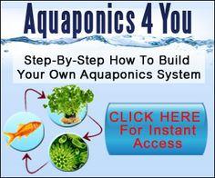 Growing Marijuana - Hemp - 420 - Cannabis - Pot - Weed with Aquaponics System