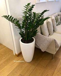 Indoor Water Garden, Indoor Plant Pots, Outdoor Plants, Zz Plant, Living Room Plants, House Plants Decor, Plant Decor, Interior Plants, Interior And Exterior