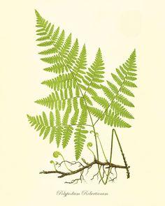 Fern art print vintage antique Botanical Art by VictorianWallArt