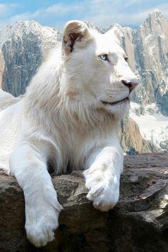Majestuosidad