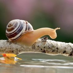 Close Up Photos of Snails