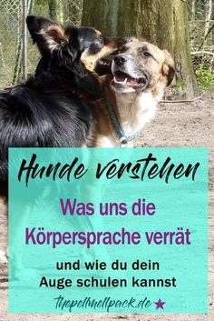 Körpersprache der Hunde – Wie Hunde mit ihrem Körper und ihrer Mimik kommuni… Dog Body Language – How dogs communicate with their bodies and facial expressions and how we can learn to look more closely. Baby Dogs, Dogs And Puppies, Animals And Pets, Baby Animals, Dog Body Language, Dog Hacks, Pet Life, Pet Peeves, Dogs Of The World