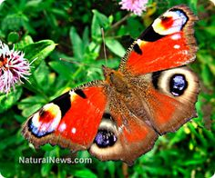 Scientists develop amazing new waterproof surface that mimics plant leaves, butterfly wings