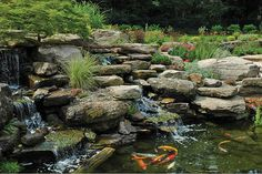 The koi pond is stocked with 50 fish and just beyond it are a travertine patio and a swimming pool.