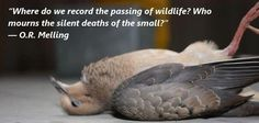 The Passing Of Wildlife