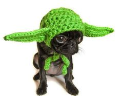 Hand knitted hat for dogs #pets #dogs CUTEST #yoda