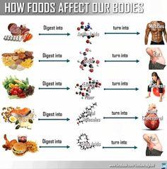 Welk effect heeft onze voeding op ons lichaam !