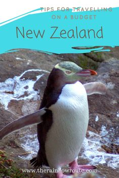 New Zealand doesn't have to cost a fortune! Find out how you can travel cheaply and learn about free activities that can save you hundreds of dollars!