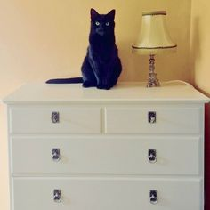 My black cat Rio posing for a picture. She fits in nicely with the vintage lamp and the drawer.