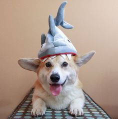 Here Are Our Top 13 Dog Costumes for Halloween