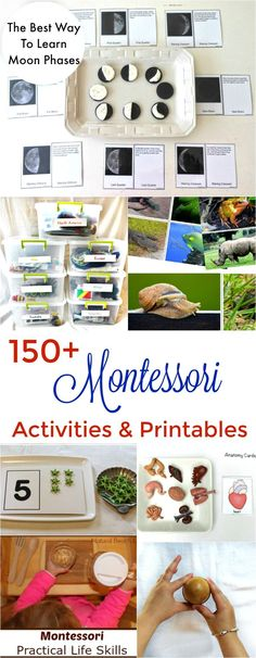 150 The Best Montessori Activities Free Printables Montessori Books Montessori Preschool Montessori Spaces Montessori Toys Practical life and Science Montessori, Montessori Books, Montessori Practical Life, Montessori Education, Montessori Classroom, Montessori Toddler, Montessori Kindergarten, Preschool Themes, Preschool Printables