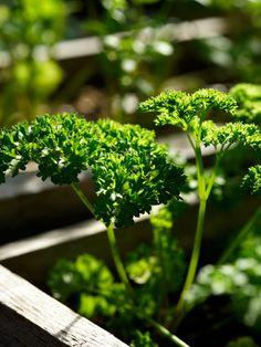 Zone by zone to-do list for gardeners in November: Organic Gardening
