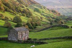 Swaledale, Autumn, Yorkshire Dales - Swaledale Yorkshire England