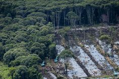 Greenpeace photos expose palm oil giant's deforestation in Indonesia