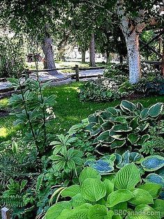 How to Plant a Shade Garden