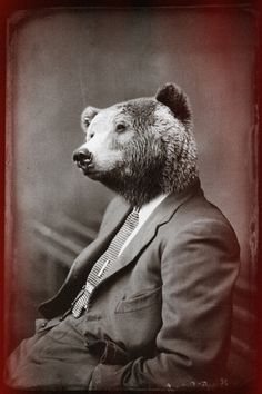 Ponder BEARS. Zippertravel.