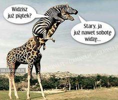 Giraffe, Geek Stuff, Lol, Celebrities, Memes, Funny, Movie Posters, Animals, Geek Things