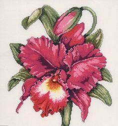 Flores - Ariadne Martins - Album Web Picasa