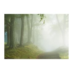 in ikea - living room wall? IKEA BJÖRKSTA Picture with frame Woodland way& cm The picture and frame come in separate packages. Frames On Wall, Framed Wall Art, Canvas Wall Art, Nature Pictures, Colorful Pictures, Beautiful Pictures, Ikea Family, Ikea Us, Design Your Life