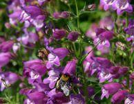 Bee Friendly Plants