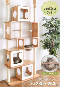 Furniture with plastic containers, design and reuseFurniture with plastic contai. - Furniture with plastic containers, design and reuseFurniture with plastic containers, design and re - Pet Furniture, Diy Furniture Projects, Repurposed Furniture, Furniture Design, Ikea Cat Bed, Cat Beds, Diy Cat Tree, Cat Shelves, Cat Playground