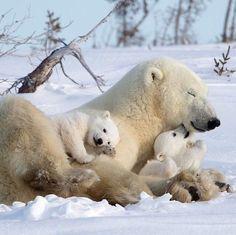 Nature Animals, Animals And Pets, Wildlife Nature, Wild Animals, Strange Animals, Farm Animals, Beautiful Creatures, Animals Beautiful, Cute Baby Animals