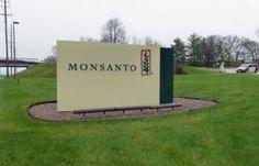 Pesticides: plainte contre Monsanto et l'Autorité européenne de sécurité des aliments