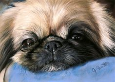 Resting pekingese, beautiful artwork!