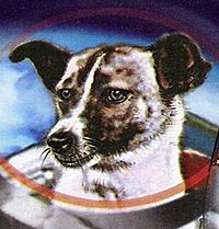 Laika  foi uma cadela russa que se tornou conhecida por ser o primeiro ser vivo terrestre a orbitar o planeta Terra. Laika era uma cadela que vivia solta nas ruas de Moscou, pesava aproximadamente seis quilos e tinha três anos de idade quando foi capturada para o programa espacial soviético. Originalmente a chamaram Kudryavka (crespinha), depois Zhuchka (bichinho), e logo Limonchik (limãozinho), para finalmente chamá-la de Laika.