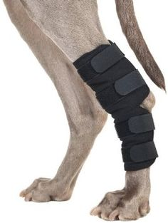 Back on Track Therapeutic Dog hock Brace (back leg brace) This Therapeutic Dog Hock Brace is constructed from a neoprene outer shell and Welltex fabric infused with ceramic particles State-of-the-art therapy product, clinically proven to reduce pain and chronic inflammation The infrared warmth can help relax your dog's muscles and relieve joint pain The therapeutic Dog Hock Brace is ideal for both injury prevention and recovery