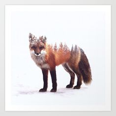 Fox Art Print by Peg Essert
