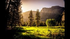 amazing dawn fall fog foliage forest grass green landscape mist mountains nature outdoors scenery s Lightroom, Photoshop, Scenic Photography, Landscape Photography, Photography Website, Photography Ideas, Nature Photography, Relaxing Gif, Relaxing Music