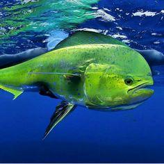 Aqua Filter - Aquarium Filters And Aquarium Supplies Underwater Creatures, Underwater Life, Ocean Creatures, Weird Creatures, Fishing World, Sea Fishing, Fauna Marina, Life Under The Sea, Salt Water Fish