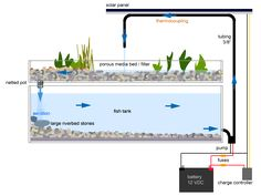 DIY Aquaponics System - Growing Fish and Vegetables together