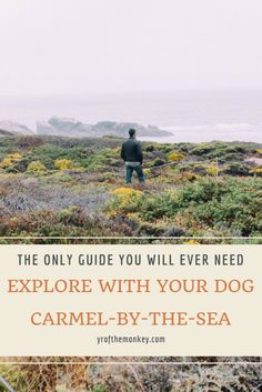 Carmel By the sea California Dog friendly travel with dogs July 4