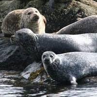 Image result for portnalong isle of skye seal beach