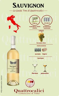Look at an easy to understand map with your route of Italian wine zones and huge wine selections. Guide Vin, Wine Guide, Wine Cellar Racks, Wine Rack, Wine Chart, Barolo Wine, Cheap Wine, Italian Wine, Vitis Vinifera