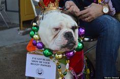 Hundreds Of St. Louis Pets Strut Their Stuff At Mardi Gras Parade