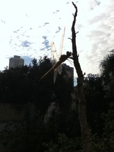 libélula 2