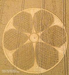 Crop Circle: il fiore dell'Om Mani Padme Hum compare a Westbury White Horse, Wiltshire (UK) | Segni dal Cielo - Portale web di UFO…