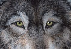 Eyes+of+the+Wolf