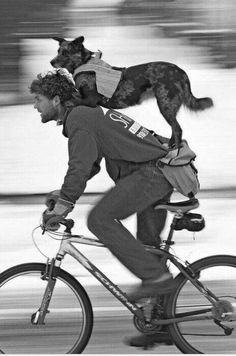 This pretty much trumps a bike leash or bike trailer! A bicycle fit for two…Pete Williams and his backseat driver, Molly, photographed by Pascal Beauvais Photo Velo, Mans Best Friend, Best Friends, Funny Friends, Cycling Tights, Australian Cattle Dog, Road Cycling, Belle Photo, Dog Life