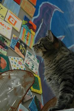 Fish Creek | Art Day for the Animals at Hands On Art Studio: Fundraiser for Door County Humane Society | 10am-6pm. Hay rides, hay house, a haunted treasure hunt, pumpkin painting, scarecrow making, games and prizes. 920-868-9311