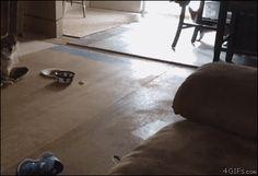 Couch Jump http://ift.tt/2hllo1o