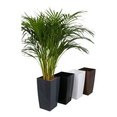 The 9 best Plants & Flowers etc. images on Pinterest | Indoor house House Plants For Sale Homebase on amazon plants, sam's club plants, costco plants, laura ashley plants,
