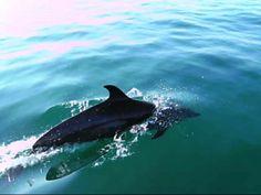 Sweet Gulf, Osa Peninsula