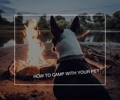 How to Camp with Your Pet - Fairfield Residential Dog Runs, Pet Care, The Great Outdoors, Cute Dogs, Funny Cats, Your Pet, Life Hacks, Camping, Pets