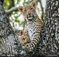 Top Shot: The Kids' Tree http://on.natgeo.com/1FFGBvS